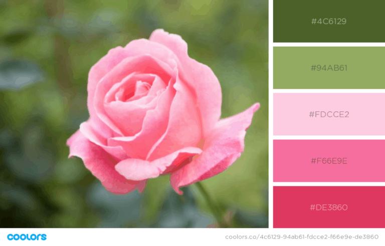 תמונה של ורד ורוד על רקע ירוק ולידו 5 צבעים מרכזיים
